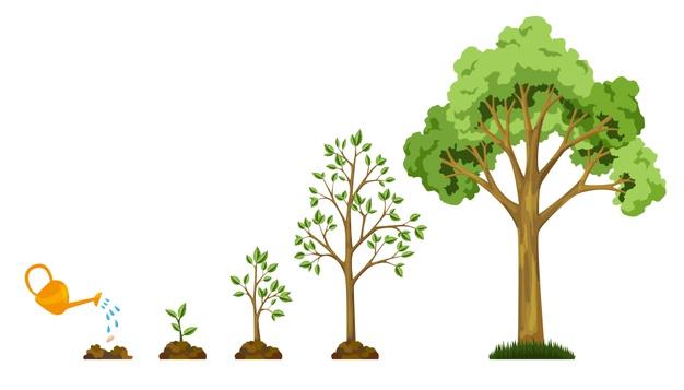 Crecimiento de la estructura web en árbol - Alt Solutions Blog
